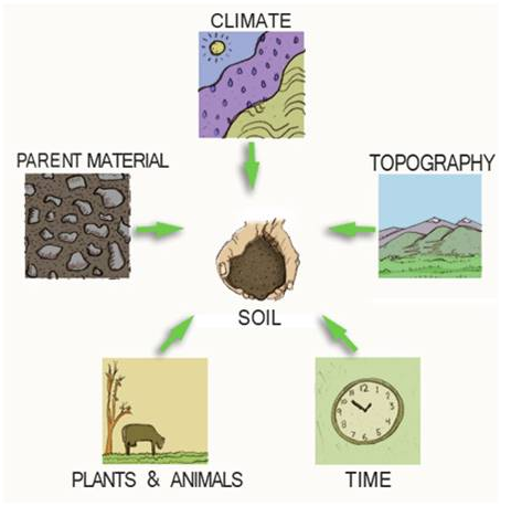 Soil forming soil profile soil types for Soil factors