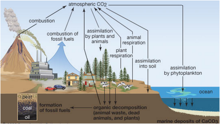 Carbon cycle oxygen cycle and phosphorus cycle biogeochemical cycles these elements cycle through evaporation absorption by plants and dispersion by wind sedimentary cycles include the leeching of minerals and salts from ccuart